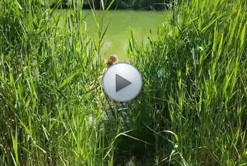 JuliaPink: Selbst am Teich gemacht und beobachtet worden