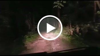 saltnpepper: Im Wald gefickt